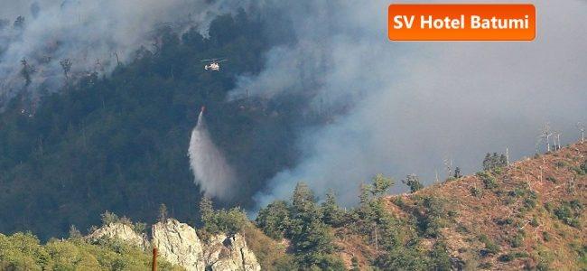 Россия предложила Грузии помощь в тушении пожара в Боржомском лесу